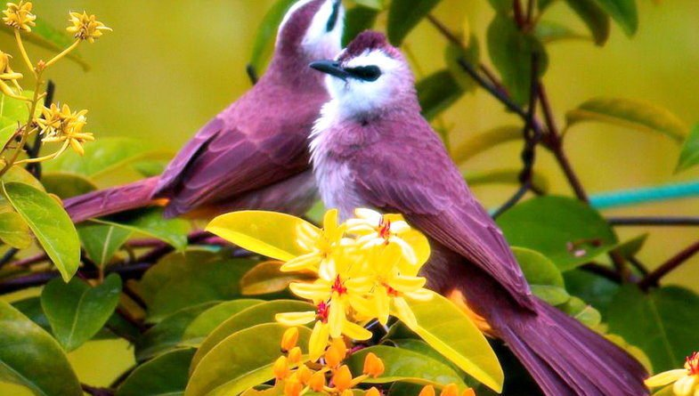 650998__this-birds-are-for-jerry_p