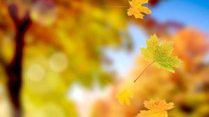 Золотой листопад