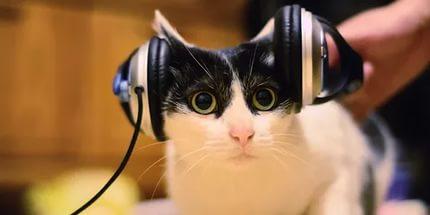 Кот в наушниках