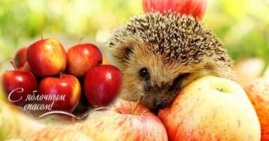 яблоки и ёж