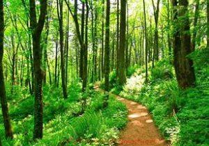 Тропинка в лесу фото
