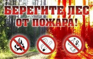 Берегите лес от пожара картинка