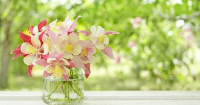 Цветы в банке