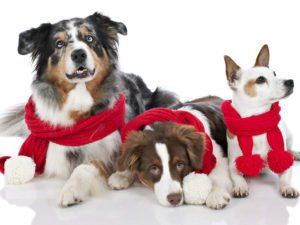 собаки в шарфиках