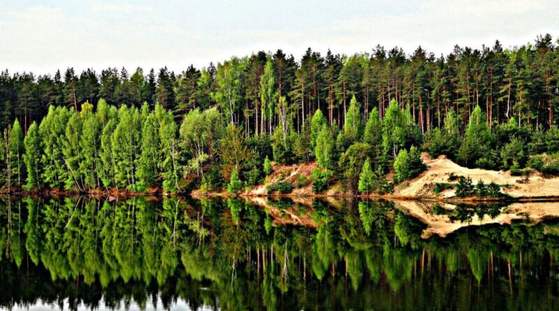 лес и вода