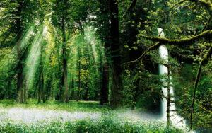 день леса