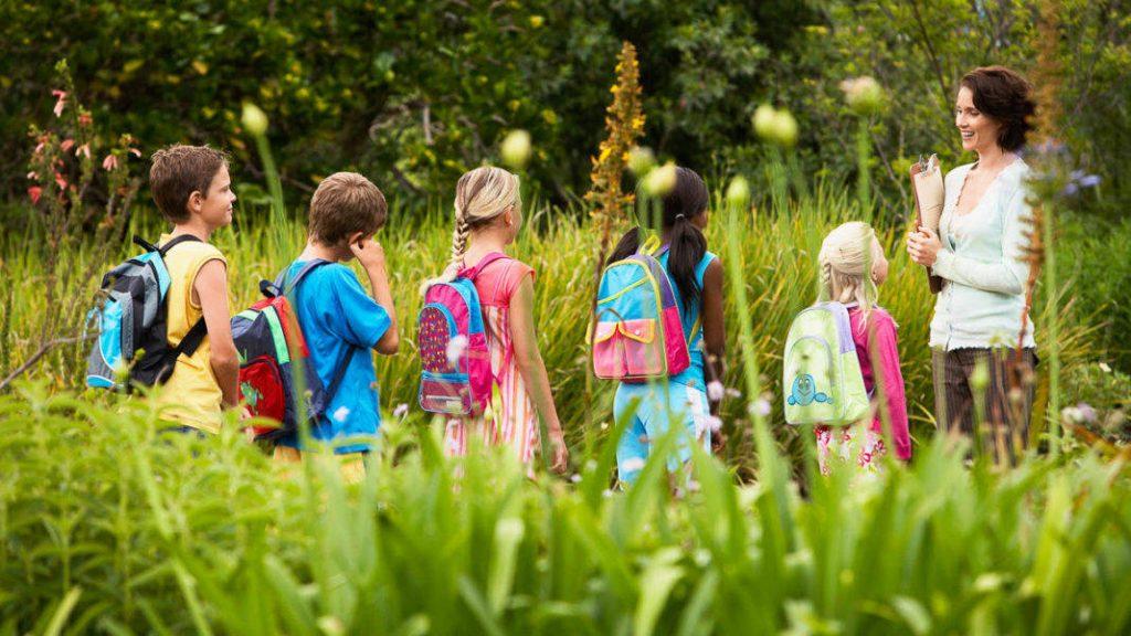 Школьная экскурсия в лесу